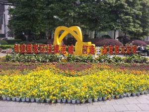 Pretty flowers in city centre